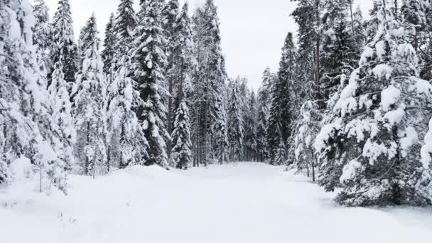 Schneefall im Winterwald - schöne Winterlandschaft