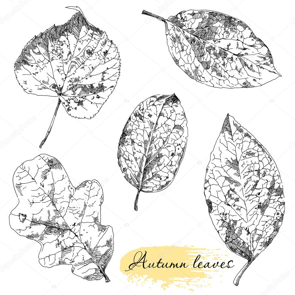 Vintage highly detailed hand drawn leaves.