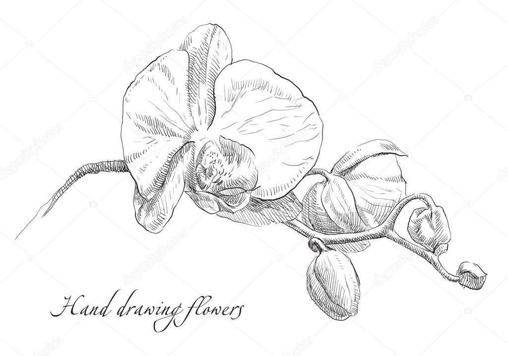 Dessin fleur d 39 orchid e de la main image vectorielle irina katunina 94330046 - Dessin d orchidee ...