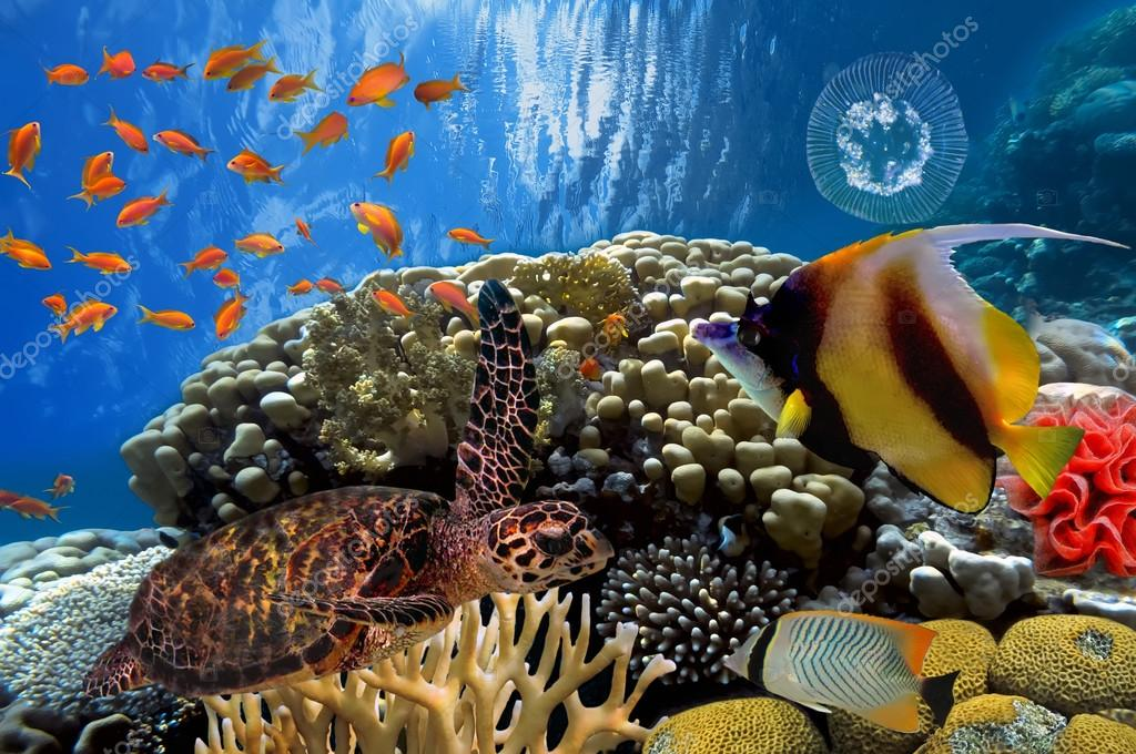Фотообои colorful coral reef with many fishes