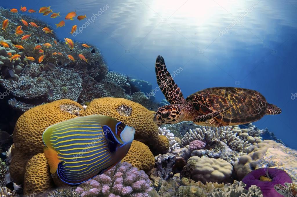 Colorido arrecife de coral con peces y tortugas marinas for Pesci con la e