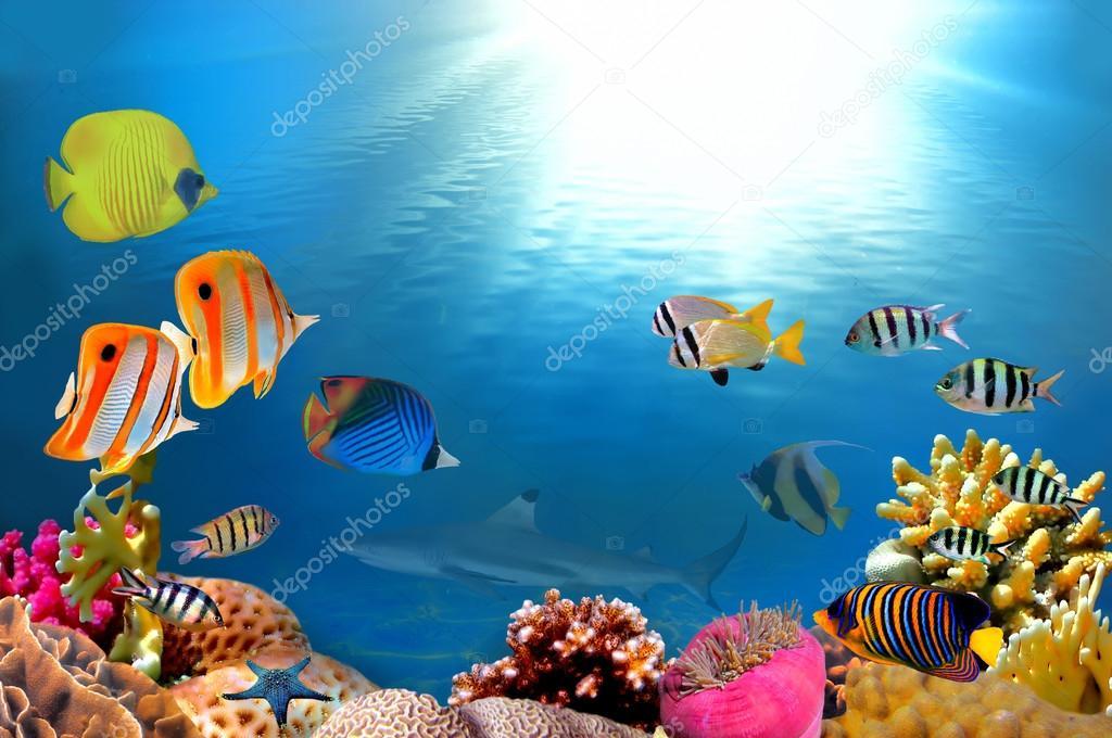Фотообои Фото коралловые колонии и акула