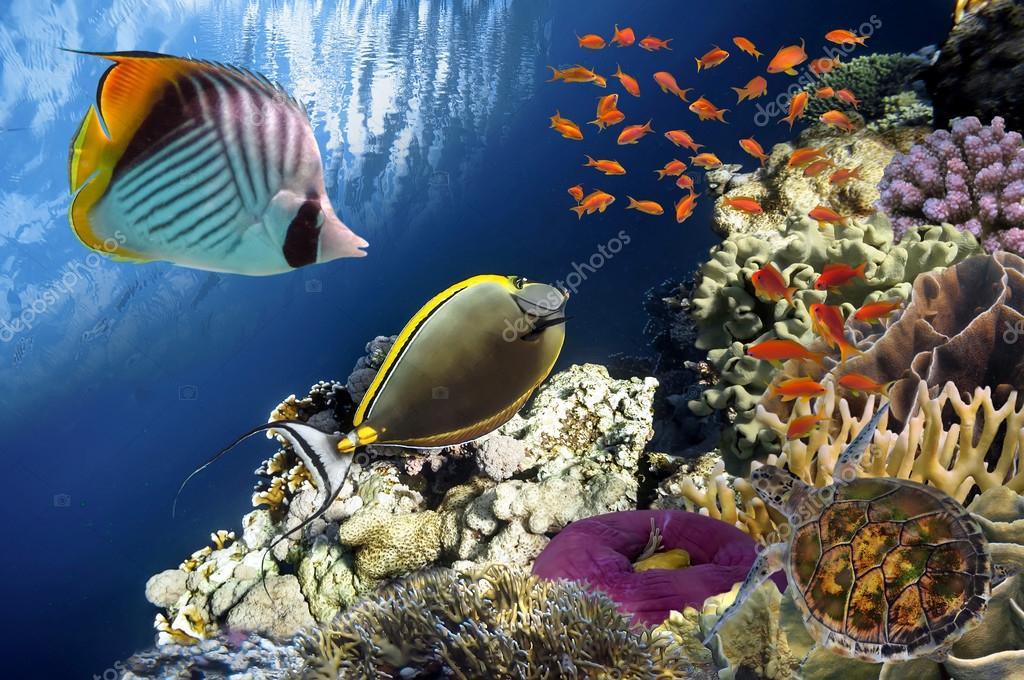 Фотообои Beautiful coral garden in Red Sea