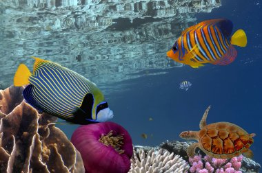 Coral reef underwater panorama with school of colorful tropical