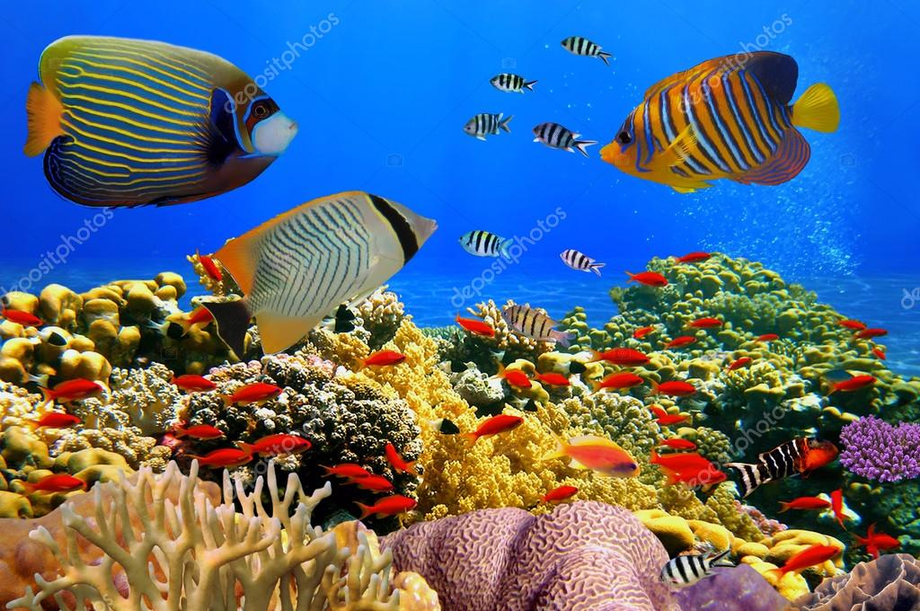 Фотообои Photo of a coral colony on a reef