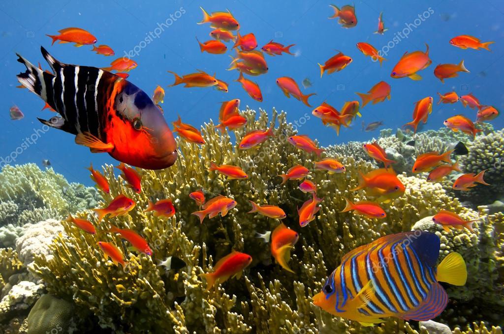 Pesci tropicali e coralli duri in acquario marino foto for Pesci tropicali acquario