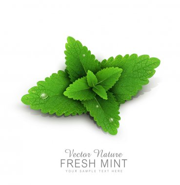 fresh mint leaves with dew drops