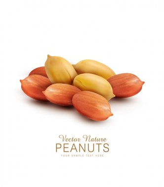 peanut kernels isolated
