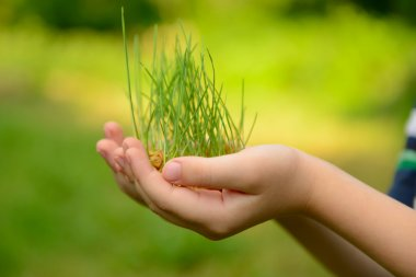 Kid's hands holding green growing plant