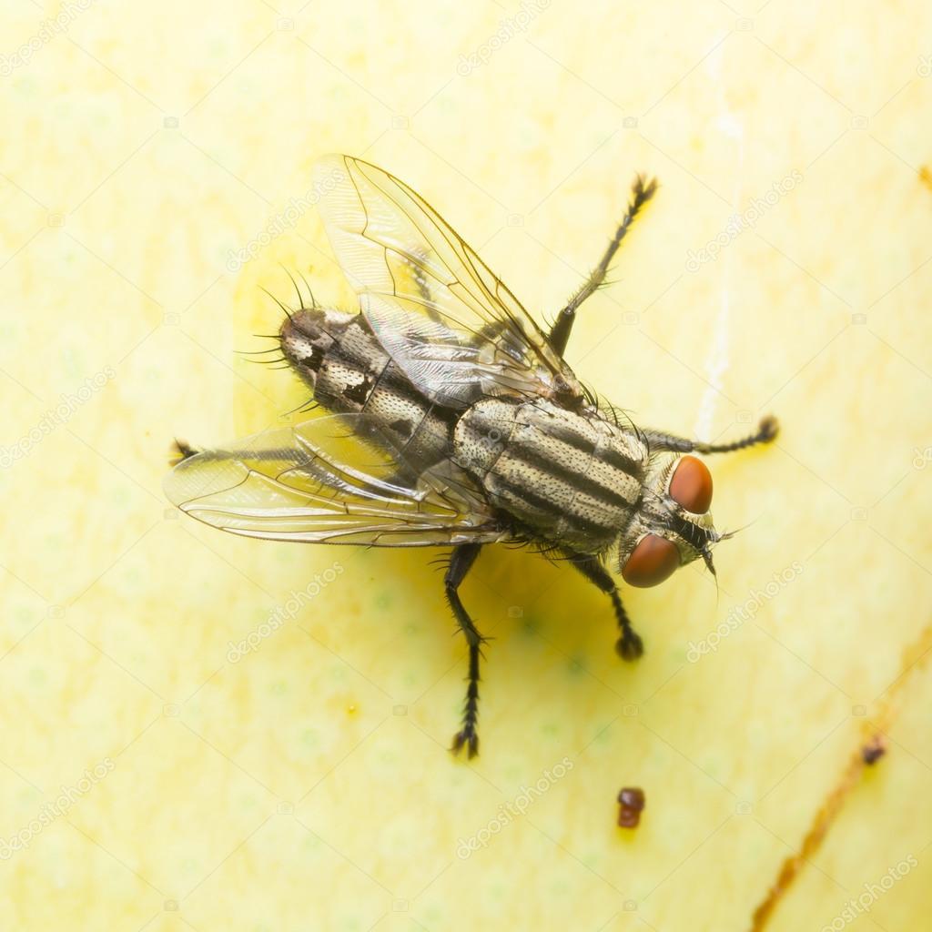 Moscas pequeas en casa excellent cmo ahuyentar las moscas - Eliminar moscas en casa ...