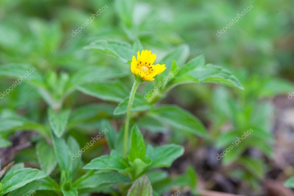 Imagenes Flores De Pequena