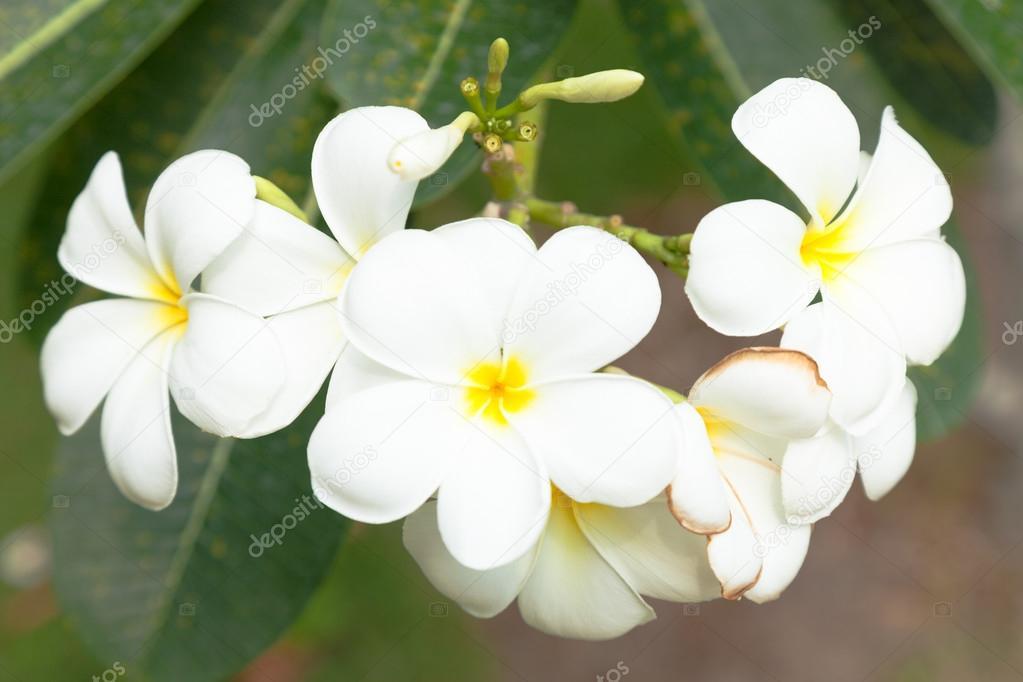Weiße Blumen auf den Bäumen — Stockfoto © noname454 #77393930