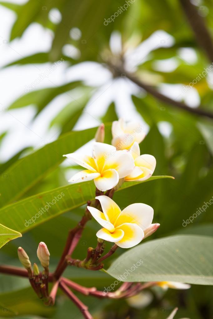 Weiße Blumen auf den Bäumen — Stockfoto © noname454 #77666946