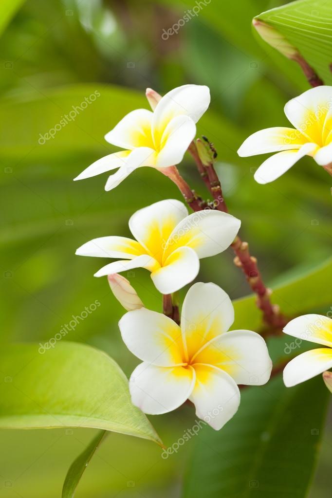Weiße Blumen auf den Bäumen — Stockfoto © noname454 #79695132