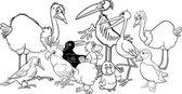 ptáků skupině omalovánky