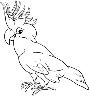 cockatoo parrot coloring page