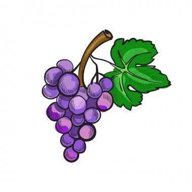 hand drawn doodle grapes