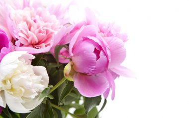 Beautiful bouquet of pink and white peonies