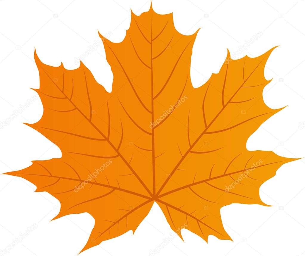 Vector autumn leaf