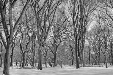 Central Park winter 148 bw