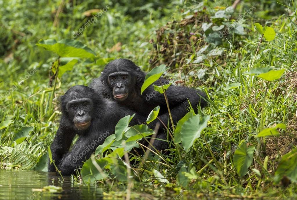 primatologie #hashtag