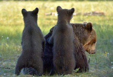"""Картина, постер, плакат, фотообои """"кубаны и мать-медведица в летнем лесу художники"""", артикул 117153618"""