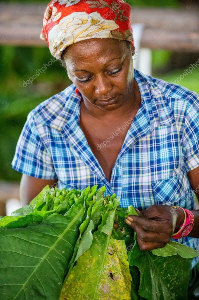 The woman touching tobacco leaves