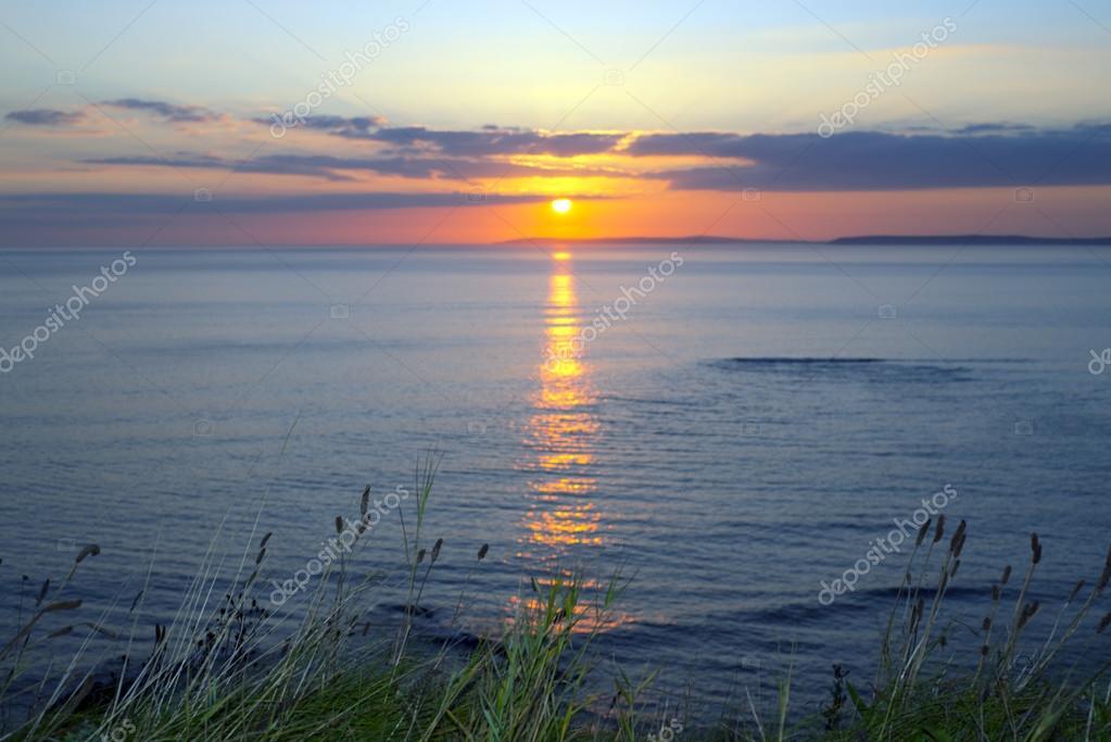 wild tall grass yellow sunset
