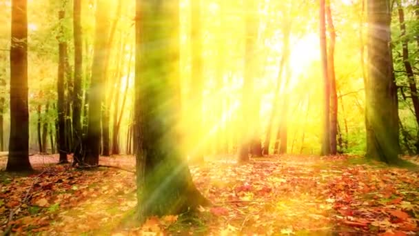 sunlight through the trees of the forest. 4K.