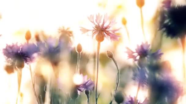 Frühling Blumen auf Sonnenuntergang Hintergrund