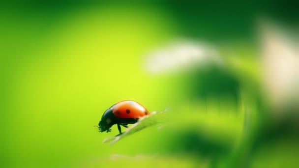 katicabogár rovar természetes tavaszi háttér