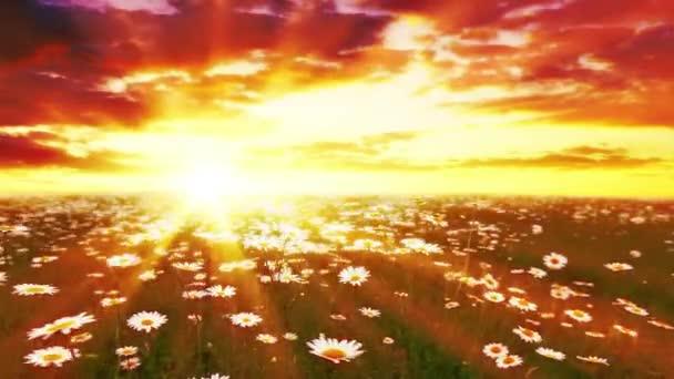 pole květin a zatažená obloha.