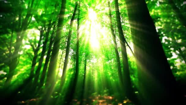 Morgen im Wald in Zeitlupe