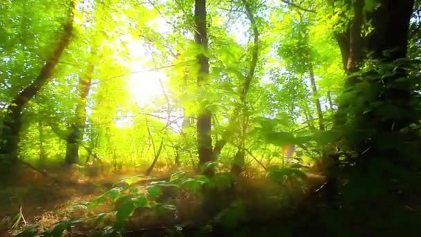 morning in a forest slow motion