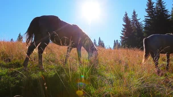 horses grazing on the background forest