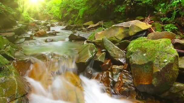horský potok v lese