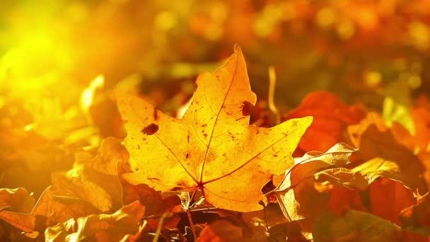 berušky na podzimní listí