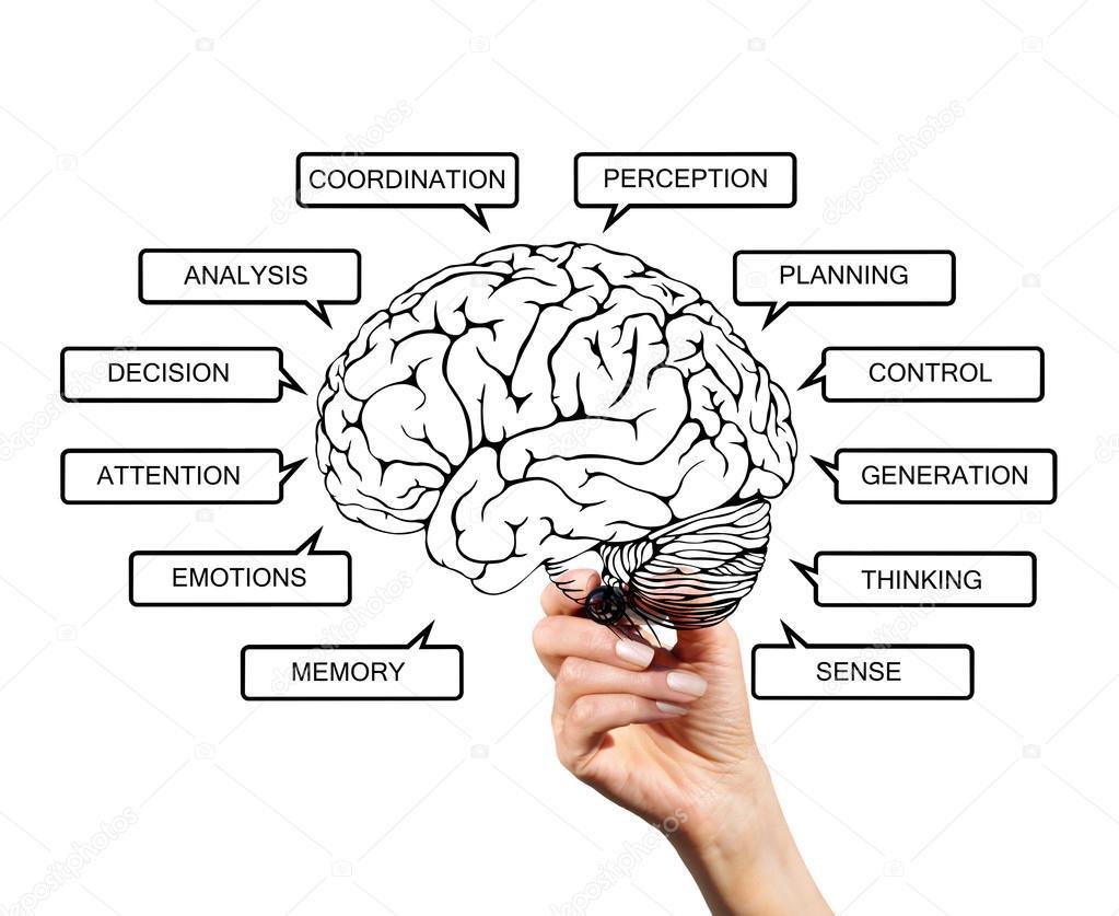 Diagrama de las funciones cerebrales — Foto de stock © VladNik #68482755