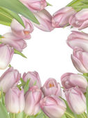 Tulipán květy hranice. EPS 10