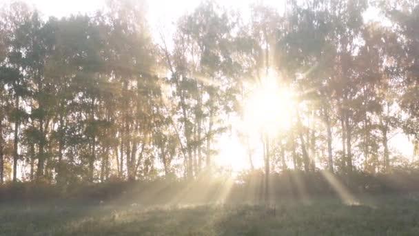 Napsugarak a ködön és fákon át ősszel