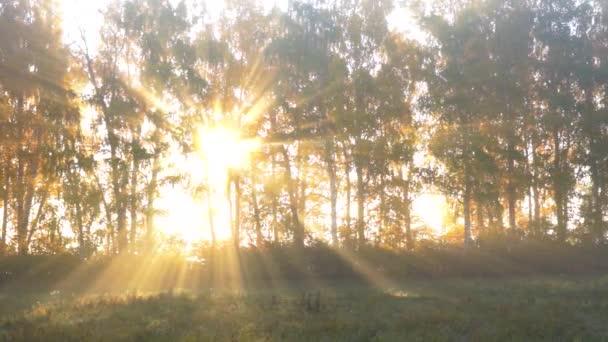 Sonnenstrahlen durch Nebel und Bäume im Herbst