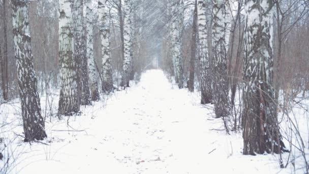 Zimní les s padajícími sněhovými vločkami