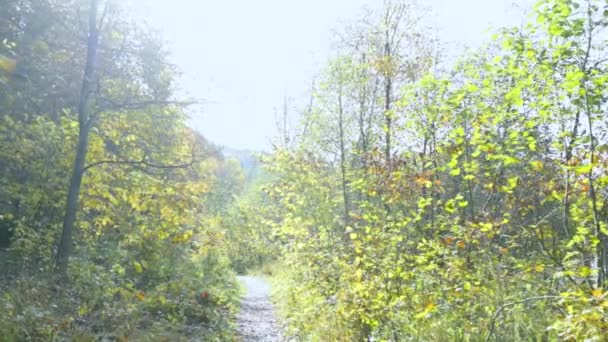 First-person view. Walk in the morning autumn forest along the path
