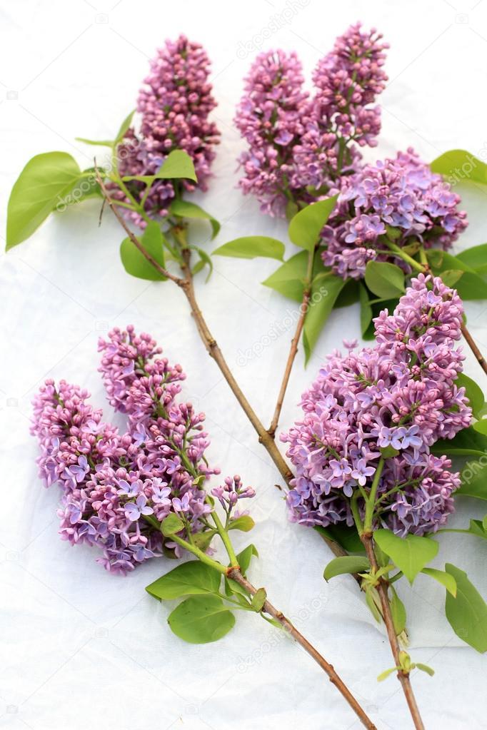 Mudas Ornamentais e Arbustos - Frutabella