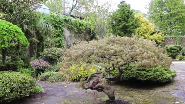 Zahrada, záběry krásné jehličnatý