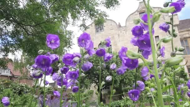 Цветы в саду. видео.