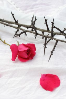Thorns against white fabric and red rose petals, Christian background