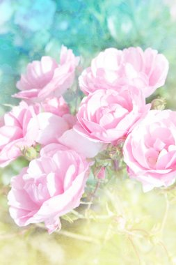 Beautiful floral background with pink roses