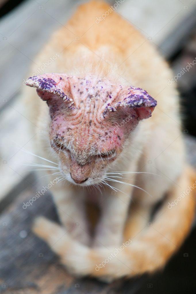 Tmavá kůže kočička