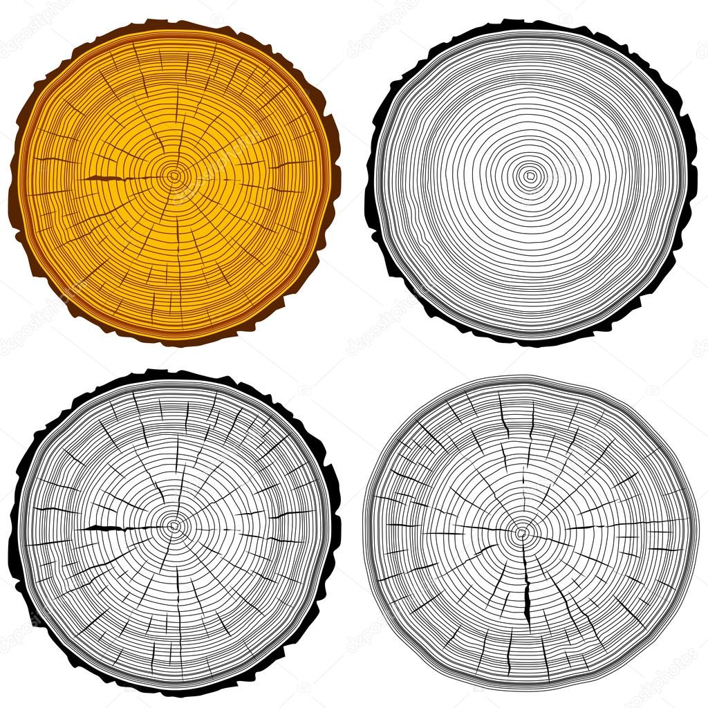 Set tree rings saw cut tree trunk background. Vector illustratio